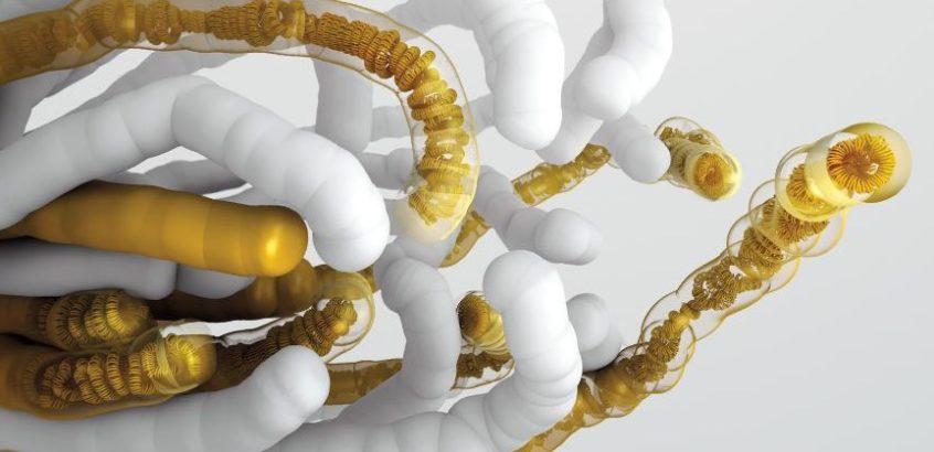 genome-yeast-846x410