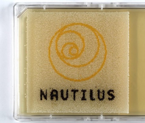 yeast nautilus logo